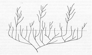 Figure 1.  A biological system evolving through time.