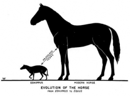 Figure 3. Endpoints of the horse lineage.