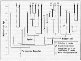 Figure 7. Chart detail, B. McFadden, from Gould.