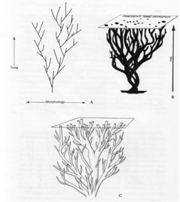 "Figure 9. Evolutionary ""bushes"", from Gould."